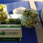 crosby-amarilohops